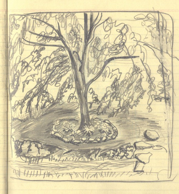 dogwood tree at moms