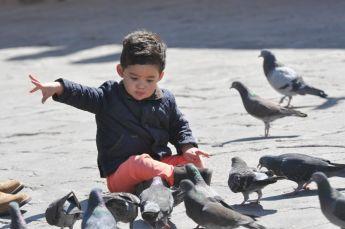 z pigeons.jpg